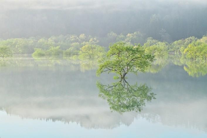朝霧とカヌーで体感!水面に映る神秘の「水没林」