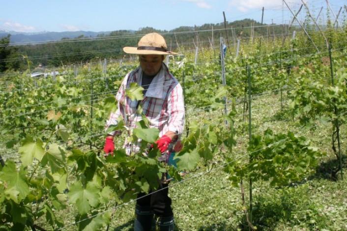 農業ガチ体験ツアー