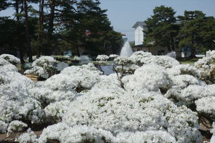 真っ白な雪景色「白つつじ公園」散策とレトロな雰囲気のあら町巡り ※募集は終了しました。